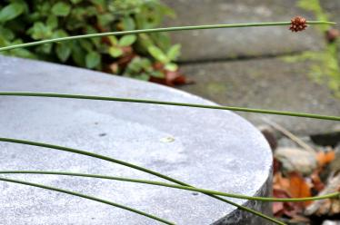 Polished concrete and native plants
