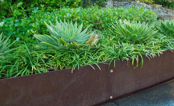 corten planter spiral aloe